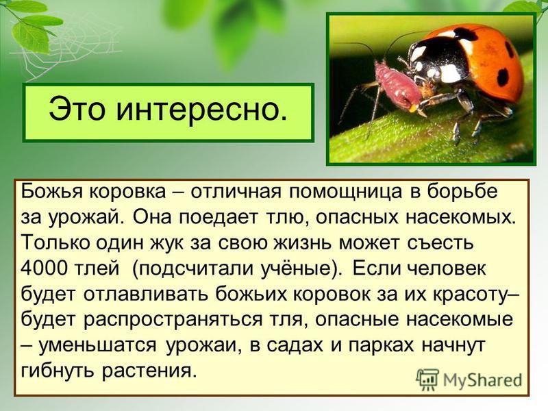 Это интересно. Божья коровка – отличная помощница в борьбе за урожай. Она поедает тлю, опасных насекомых. Только один жук за свою жизнь может съесть 4000 тлей (подсчитали учёные). Если человек будет отлавливать божьих коровок за их красоту– будет рас