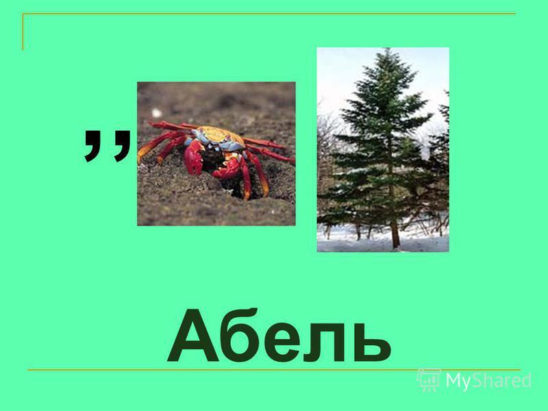 Абель,,