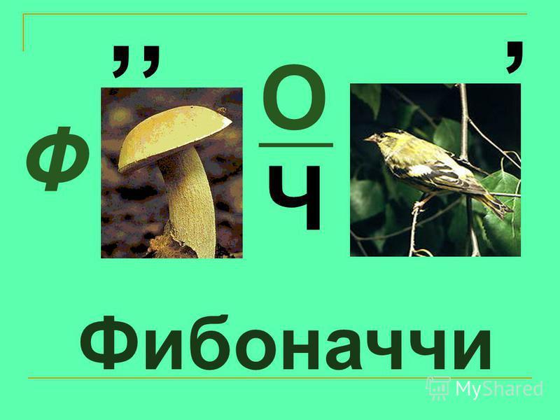 Фибоначчи Ф,, О, Ч