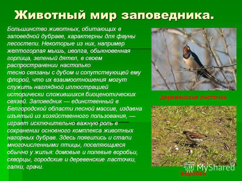 Большинство животных, обитающих в заповедной дубраве, характерны для фауны лесостепи. Некоторые из них, например желтогорлая мышь, иволга, обыкновенная горлица, зеленый дятел, в своем распространении настолько тесно связаны с дубом и сопутствующей ем