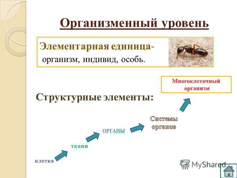 Элементарная единица- организм, индивид, особь. Организменный уровень Структурные элементы: ткани