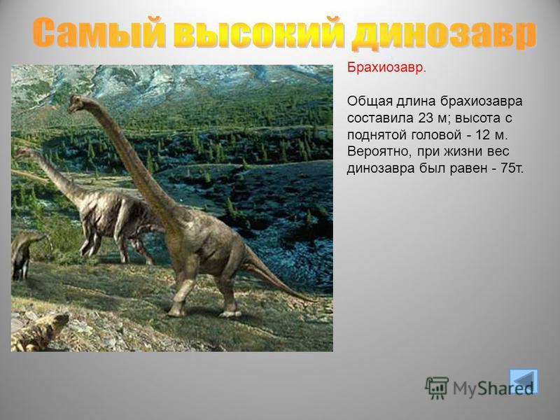 Брахиозавр. Общая длина брахиозавра составила 23 м; высота с поднятой головой - 12 м. Вероятно, при жизни вес динозавра был равен - 75 т.