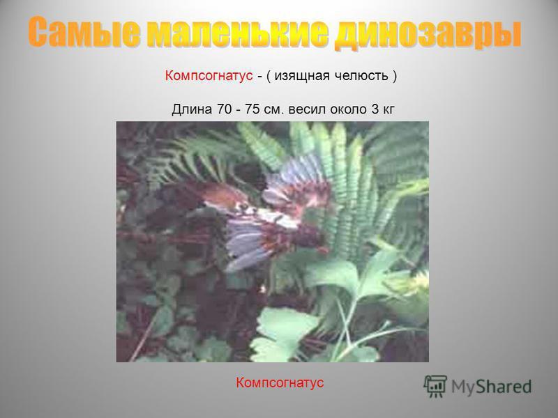 Компсогнатус - ( изящная челюсть ) Длина 70 - 75 см. весил около 3 кг Компсогнатус