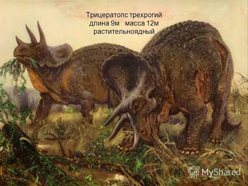Трицератопс трехрогий длина 9 м масса 12 м растительноядный