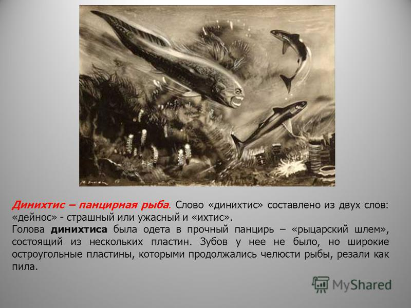 Динихтис – панцирная рыба. Слово «динихтис» составлено из двух слов: «дейнос» - страшный или ужасный и «ихтис». Голова динихтиса была одета в прочный панцирь – «рыцарский шлем», состоящий из нескольких пластин. Зубов у нее не было, но широкие остроуг