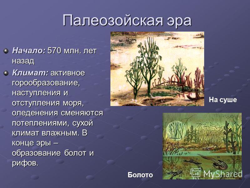 Палеозойская эра Начало: 570 млн. лет назад Климат: активное горообразование, наступления и отступления моря, оледенения сменяются потеплениями, сухой климат влажным. В конце эры – образование болот и рифов. На суше Болото