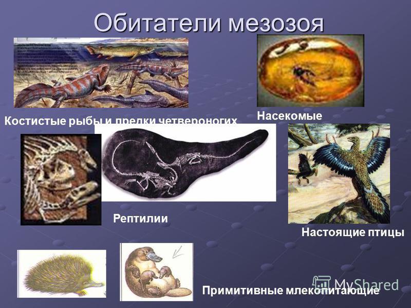 Обитатели мезозоя Костистые рыбы и предки четвероногих Насекомые Рептилии Настоящие птицы Примитивные млекопитающие