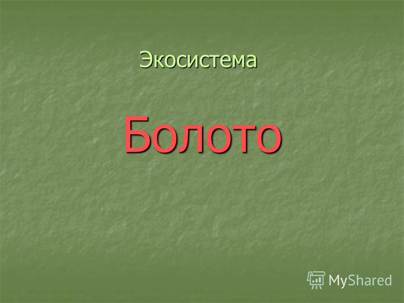 Экосистема Болото