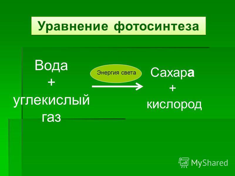 Уравнение фотосинтеза Вода + углекислый газ Сахар а + кислород Энергия света