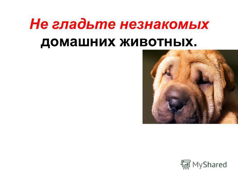 Не гладьте незнакомых домашних животных.