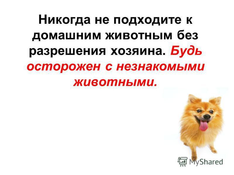 Никогда не подходите к домашним животным без разрешения хозяина. Будь осторожен с незнакомыми животными.