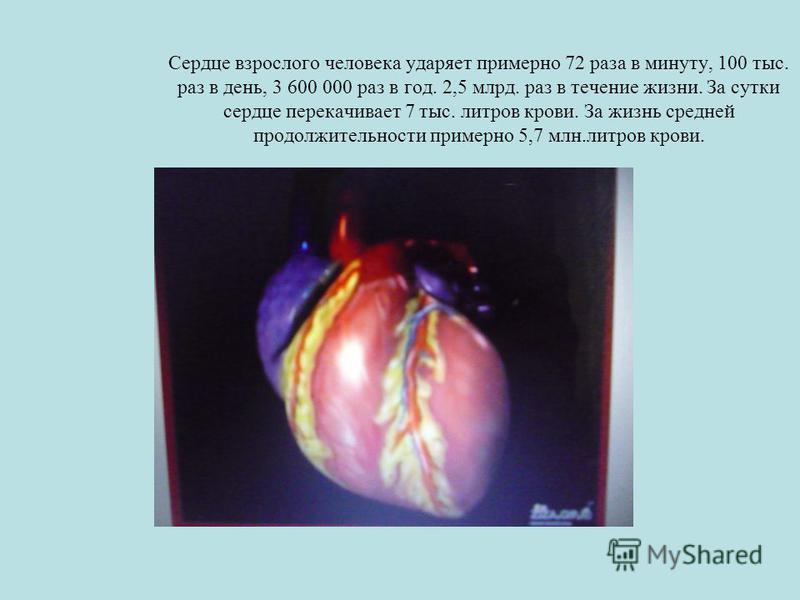 Сердце взрослого человека ударяет примерно 72 раза в минуту, 100 тыс. раз в день, 3 600 000 раз в год. 2,5 млрд. раз в течение жизни. За сутки сердце перекачивает 7 тыс. литров крови. За жизнь средней продолжительности примерно 5,7 млн.литров крови.