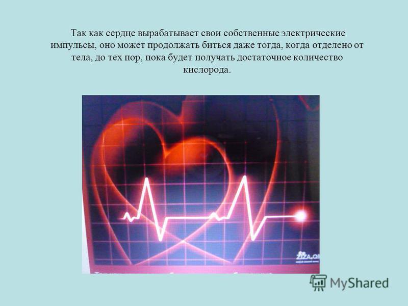 Так как сердце вырабатывает свои собственные электрические импульсы, оно может продолжать биться даже тогда, когда отделено от тела, до тех пор, пока будет получать достаточное количество кислорода.