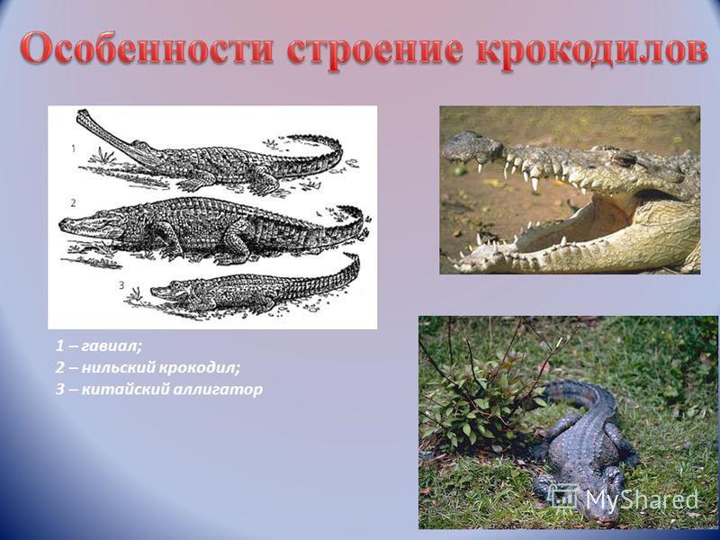 1 – гавиал; 2 – нильский крокодил; 3 – китайский аллигатор