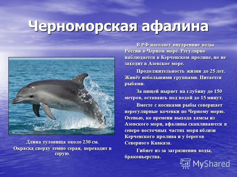 Черноморская афалина В РФ населяет внутренние воды России в Черном море. Регулярно наблюдается в Керченском проливе, но не заходит в Азовское море. Продолжительность жизни до 25 лет. Живёт небольшими группами. Питается рыбами. За пищей ныряет на глуб