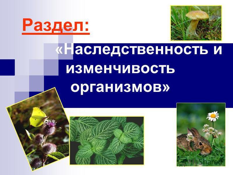 Раздел: «Наследственность и изменчивость организмов»