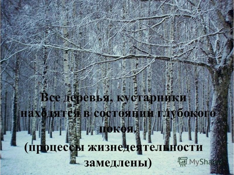 Все деревья, кустарники находятся в состоянии глубокого покоя. (процессы жизнедеятельности замедлены)