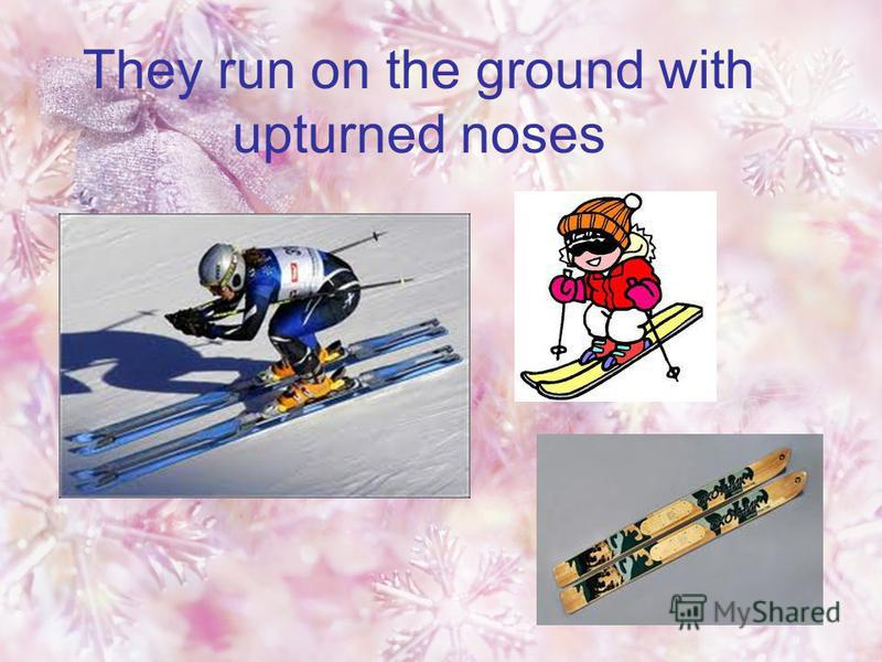 They run on the ground with upturned noses