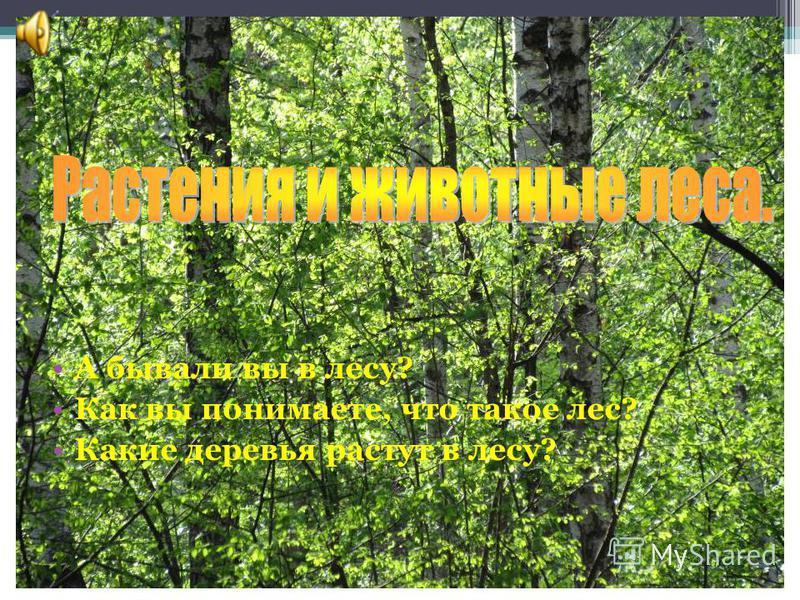 А бывали вы в лесу? Как вы понимаете, что такое лес? Какие деревья растут в лесу?