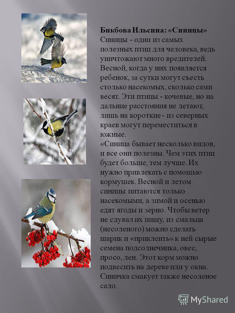 Бикбова Ильсина : « Синицы » Синицы - одни из самых полезных птиц для человека, ведь уничтожают много вредителей. Весной, когда у них появляется ребенок, за сутки могут съесть столько насекомых, сколько сами весят. Эти птицы - кочевые, но на дальние
