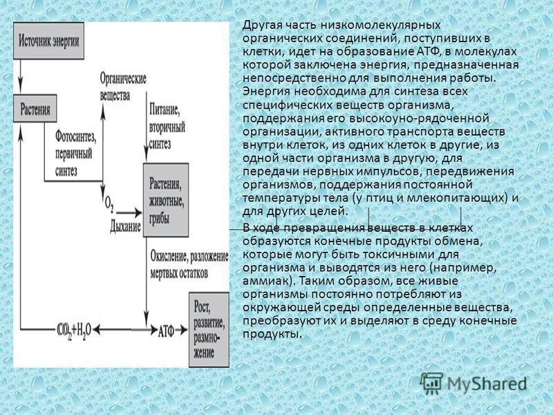 Другая часть низкомолекулярных органических соединений, поступивших в клетки, идет на образование АТФ, в молекулах которой заключена энергия, предназначенная непосредственно для выполнения работы. Энергия необходима для синтеза всех специфических вещ