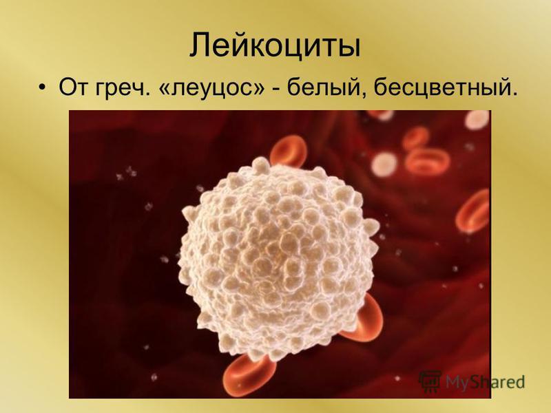 Лейкоциты От греч. «леуцос» - белый, бесцветный.