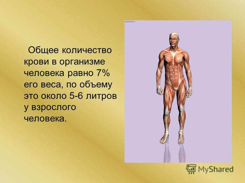 Общее количество крови в организме человека равно 7% его веса, по объему это около 5-6 литров у взрослого человека.