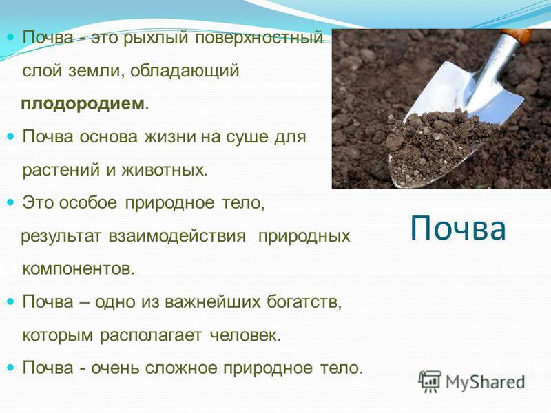 Почва Почва - это рыхлый поверхностный слой земли, обладающий плодородием. Почва основа жизни на суше для растений и животных. Это особое природное тело, результат взаимодействия природных компонентов. Почва – одно из важнейших богатств, которым расп