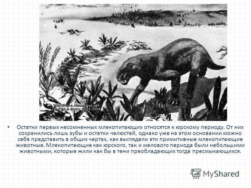 Остатки первых несомненных млекопитающих относятся к юрскому периоду. От них сохранились лишь зубы и остатки челюстей, однако уже на этом основании можно себе представить в общих чертах, как выглядели эти примитивные млекопитающие животные. Млекопита