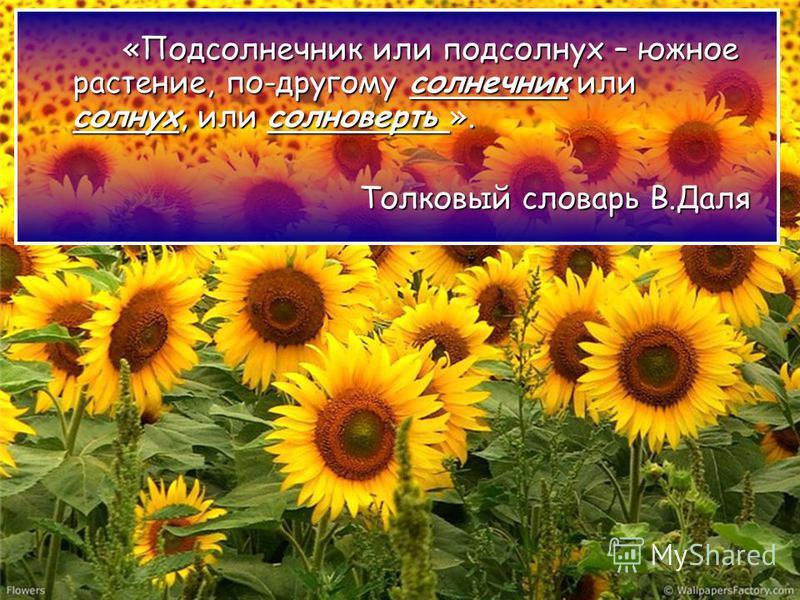 «Подсолнечник или подсолнух – южное растение, по-другому солнечник или солнух, или солноверть ». Толковый словарь В.Даля