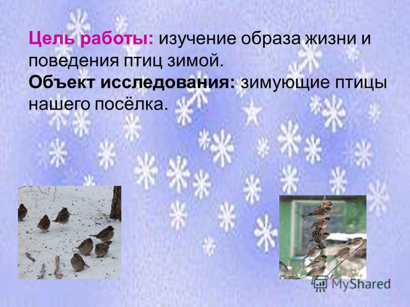 Цель работы: изучение образа жизни и поведения птиц зимой. Объект исследования: зимующие птицы нашего посёлка.