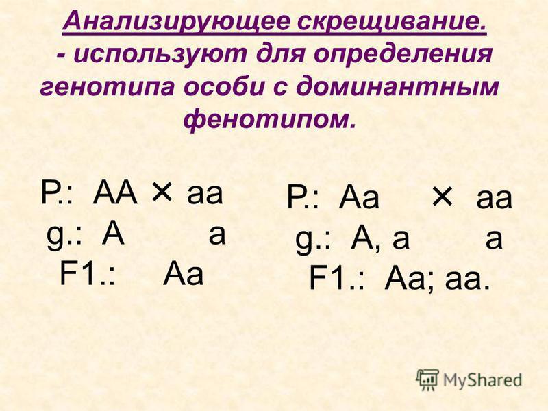 Анализирующее скрещивание. - используют для определения генотипа особи с доминантным фенотипом. Р.: АА аа g.: А а F1.: Аа Р.: Аа аа g.: А, а а F1.: Аа; аа.