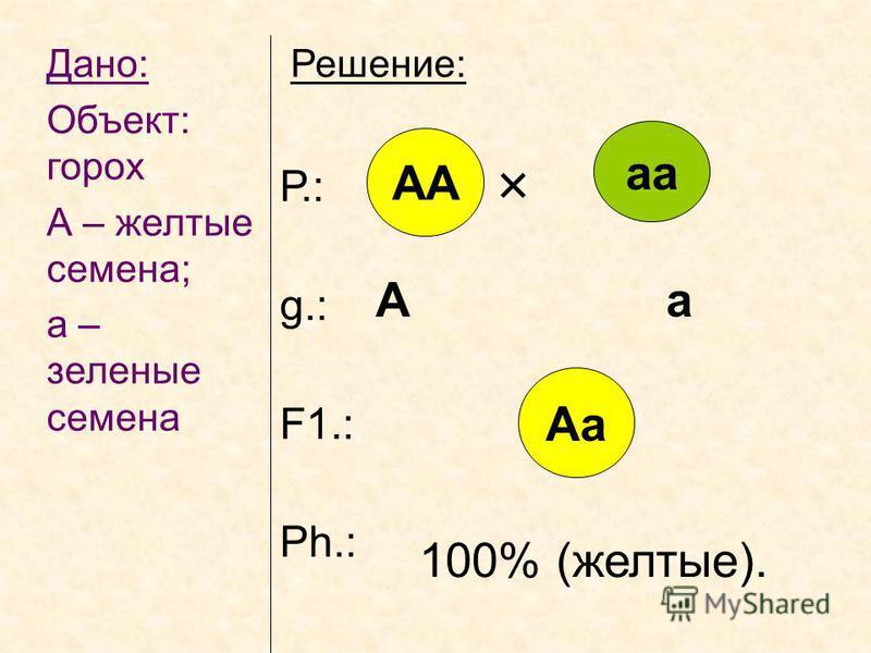 Дано: Объект: горох А – желтые семена; а – зеленые семена Решение: Р.: g.: F1.: Ph.: АА аа Аа А а 100% (желтые).