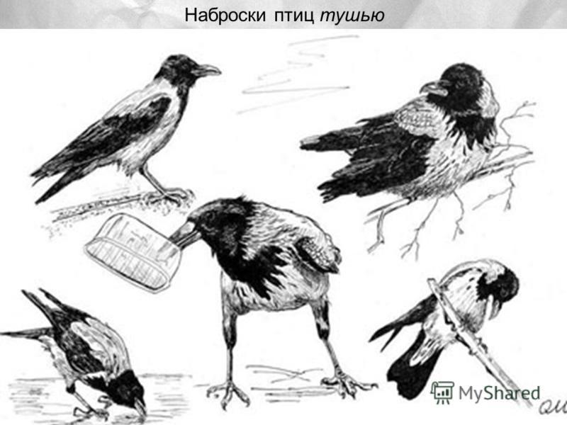 Наброски птиц тушью