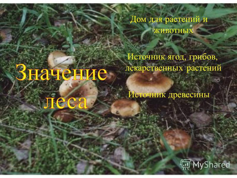 Дом для растений и животных Источник ягод, грибов, лекарственных растений Источник древесины