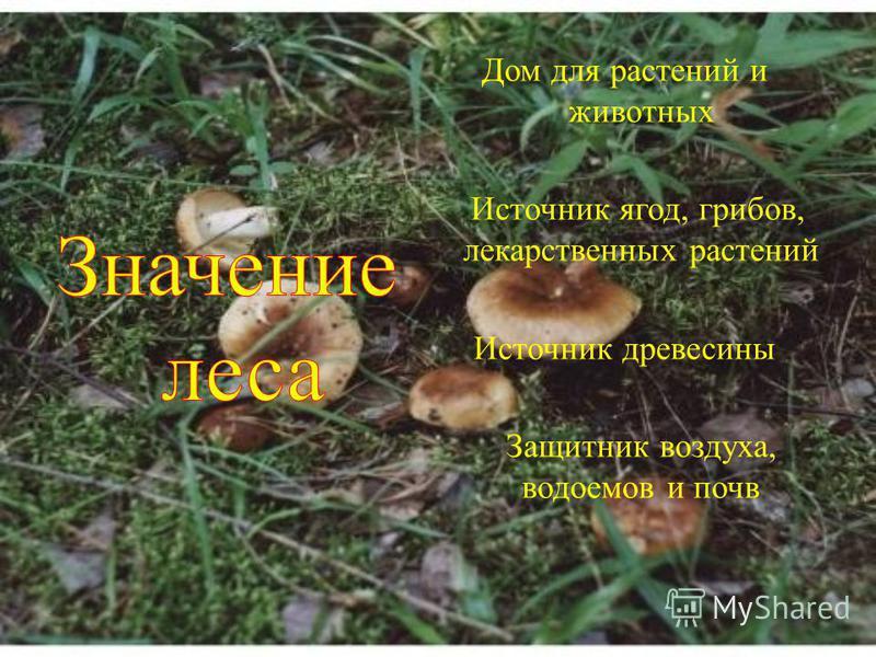 Дом для растений и животных Источник ягод, грибов, лекарственных растений Источник древесины Защитник воздуха, водоемов и почв