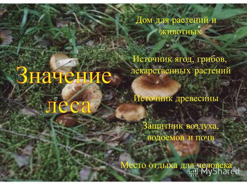Дом для растений и животных Источник ягод, грибов, лекарственных растений Источник древесины Защитник воздуха, водоемов и почв Место отдыха для человека