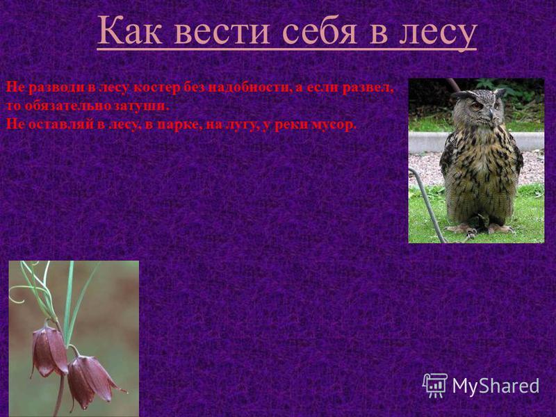 Не разводи в лесу костер без надобности, а если развел, то обязательно затуши. Не оставляй в лесу, в парке, на лугу, у реки мусор. Не ломай ветки деревьев и кустарников. Не рви на лугу, в лесу цветов. Не подходи близко к гнёздам птиц. Не сбивай грибы