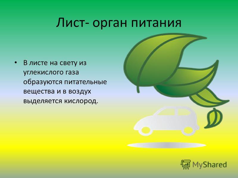 Лист- орган питания В листе на свету из углекислого газа образуются питательные вещества и в воздух выделяется кислород.