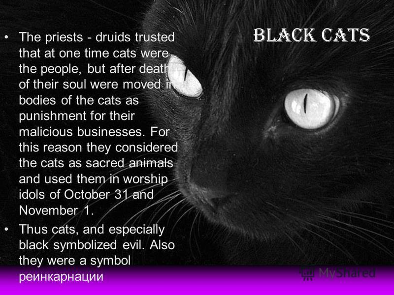 The priests - druids trusted that at one time cats were the people, but after death of their soul were moved in bodies of the cats as punishment for their malicious businesses. For this reason they considered the cats as sacred animals and used them