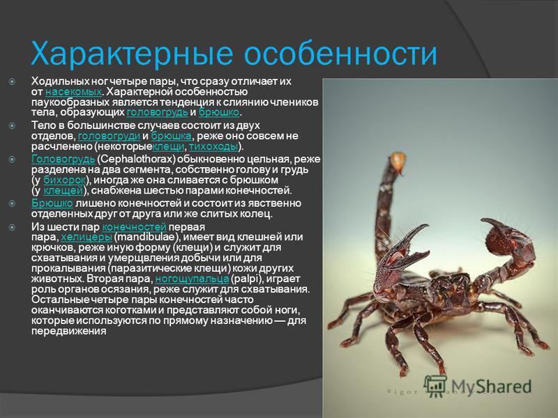 Паукообразные класс членистоногих из подтипа хелицеровых. Наиболее известные представители: пауки, скорпионы, клещи. Латинское название паукообразных происходит от греческого ράχνη «паук» (существует также миф об Арахне, которую богиня Афина преврати