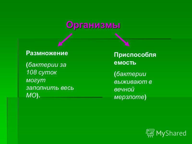 Организмы Организмы Размножение (бактерии за 108 суток могут заполнить весь МО). Приспособля емость (бактерии выживают в вечной мерзлоте)