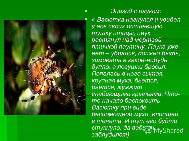 Эпизод с пауком: « Васютка нагнулся и увидел у ног своих истлевшую тушку птицы, паук растянул над мертвой птичкой паутину. Паука уже нет – убрался, должно быть, зимовать в какое-нибудь дупло, а ловушки бросил. Попалась в него сытая, крупная муха, бье