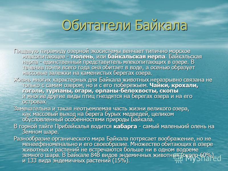 Обитатели Байкала Обитатели Байкала Пищевую пирамиду озерной экосистемы венчает типично морское млекопитающее - тюлень, или байкальская нерпа. Байкальская нерпа - единственный представитель млекопитающих в озере. В течение почти всего года она обитае