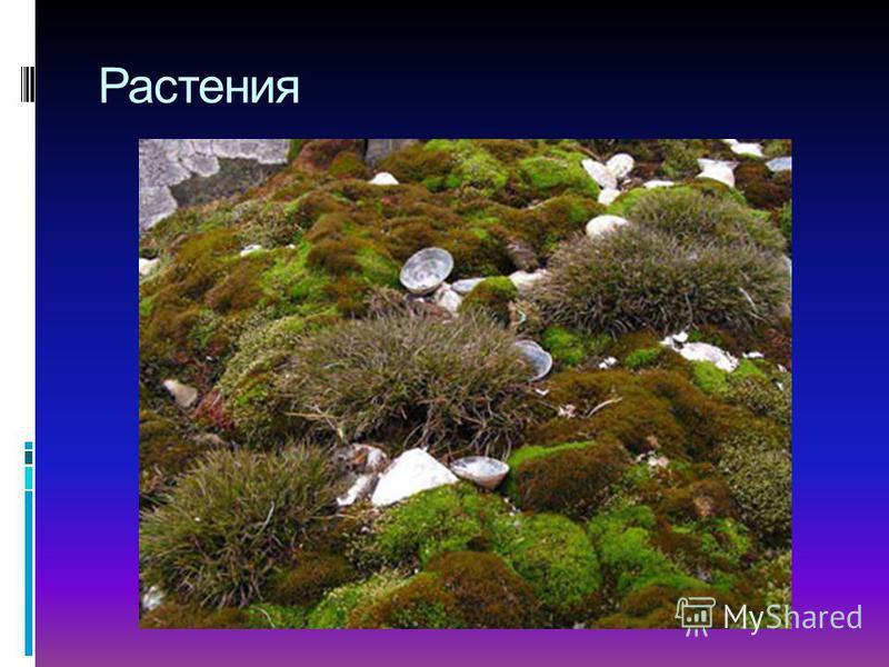 Примерный план: 1) Географическое расположение Антарктиды; 2) Открытие Антарктиды; 3) Особенности материка; 4) Погодные условия; 5) Животный и растительный мир; 6) Занятия населения.