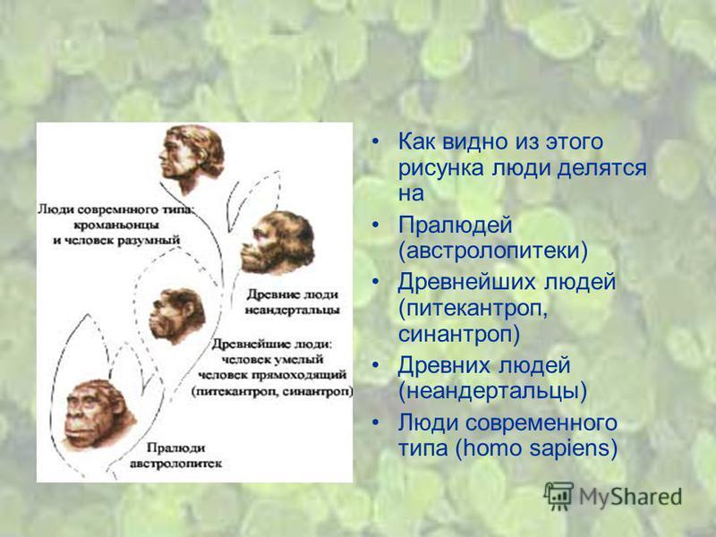 Как видно из этого рисунка люди делятся на Пралюдей (австралопитеки) Древнейших людей (питекантроп, синантроп) Древних людей (неандертальцы) Люди современного типа (homo sapiens)