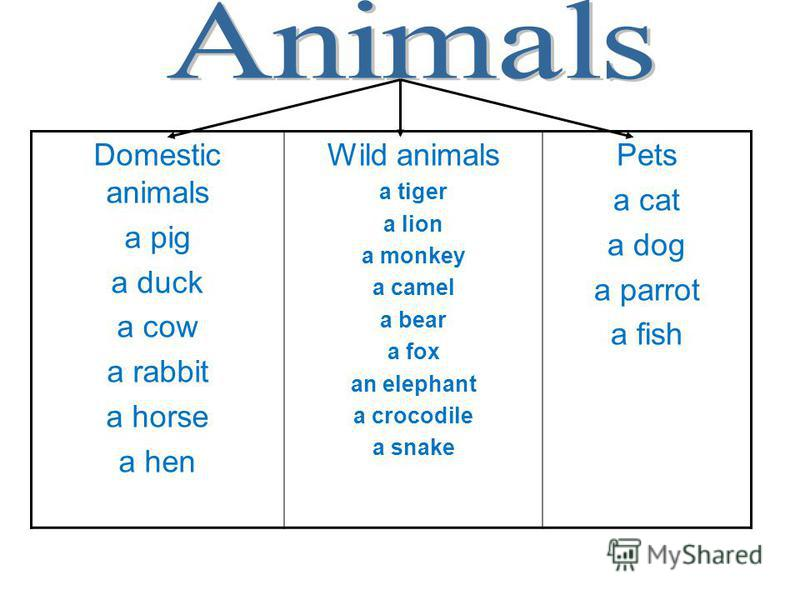 Domestic animals a pig a duck a cow a rabbit a horse a hen Wild animals a tiger a lion a monkey a camel a bear a fox an elephant a crocodile a snake Pets a cat a dog a parrot a fish