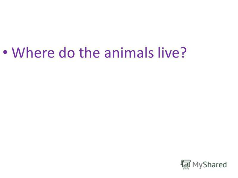 Where do the animals live?