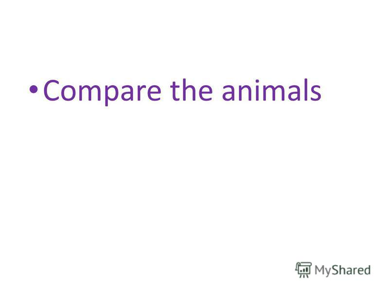 Compare the animals