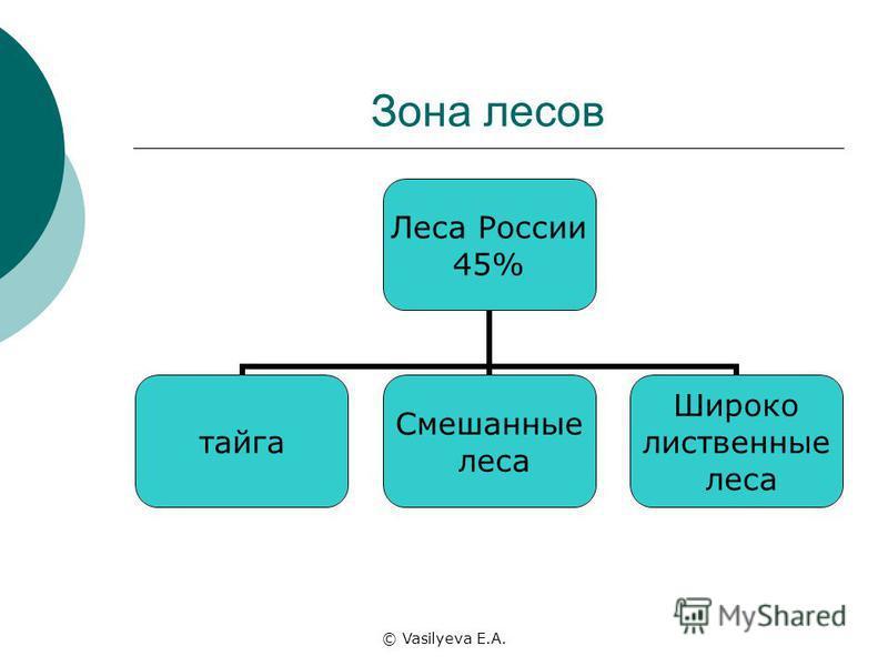 © Vasilyeva E.A. Зона лесов Леса России 45% тайга Смешанные леса Широко лиственные леса